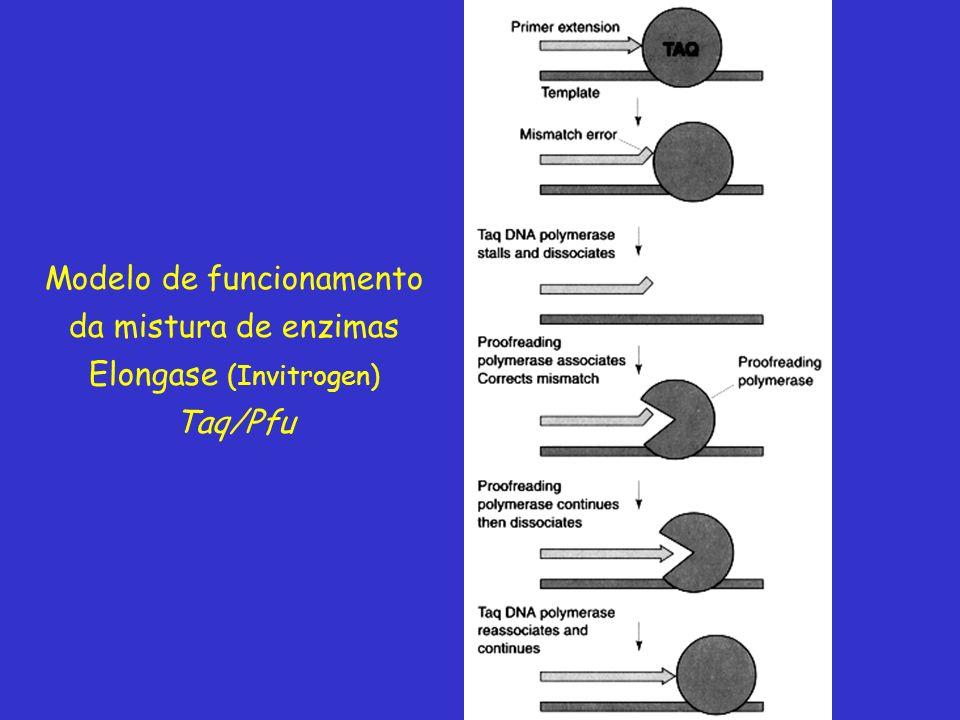 Modelo de funcionamento da mistura de enzimas Elongase (Invitrogen)