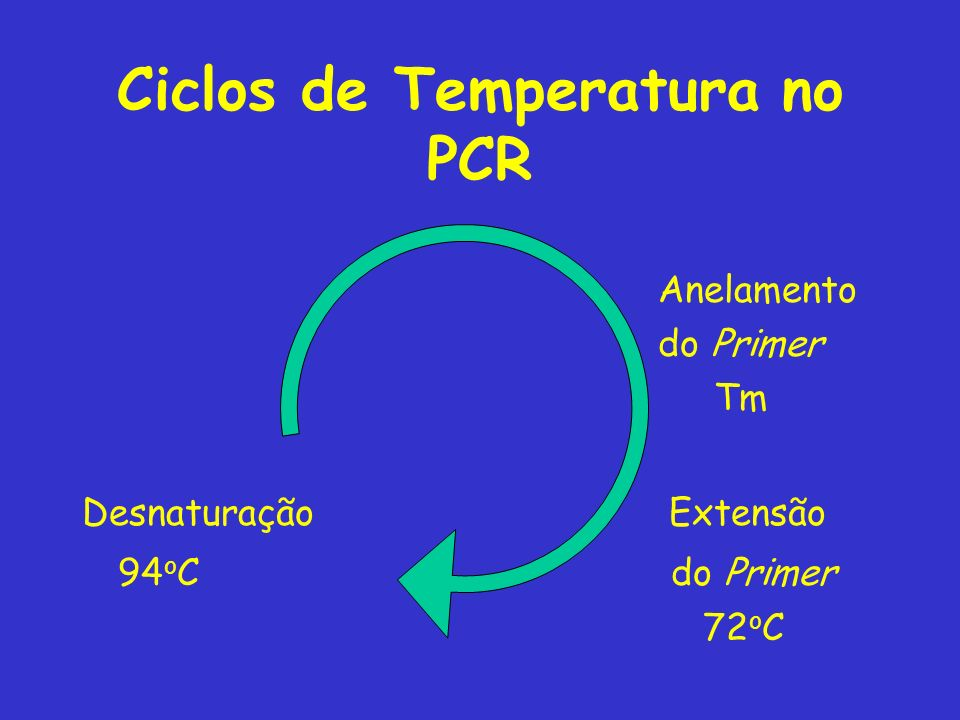 Ciclos de Temperatura no PCR
