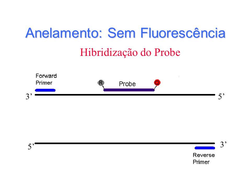 Anelamento: Sem Fluorescência