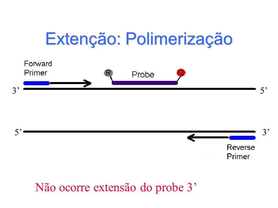 Extenção: Polimerização