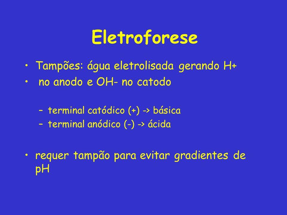 Eletroforese Tampões: água eletrolisada gerando H+