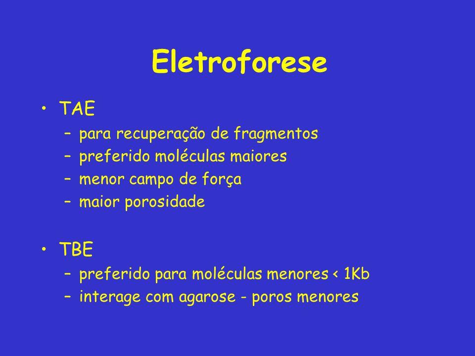 Eletroforese TAE TBE para recuperação de fragmentos