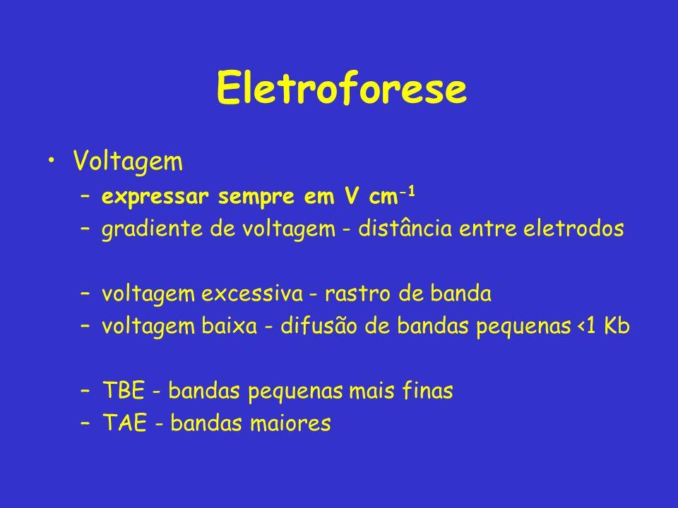 Eletroforese Voltagem expressar sempre em V cm-1