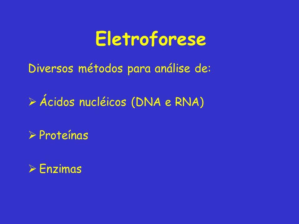 Eletroforese Diversos métodos para análise de: