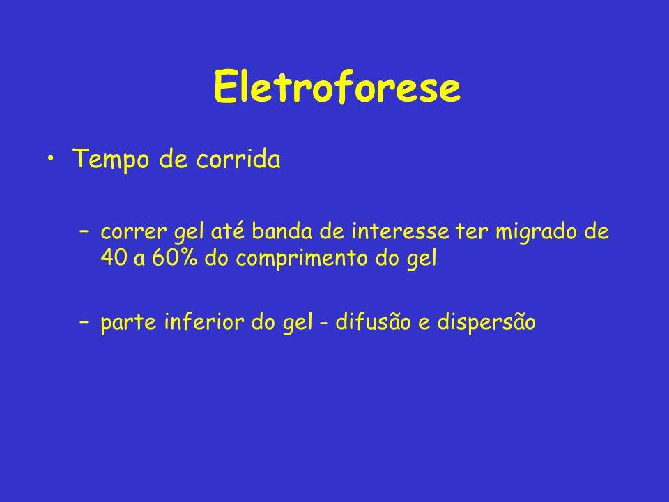 Eletroforese Tempo de corrida