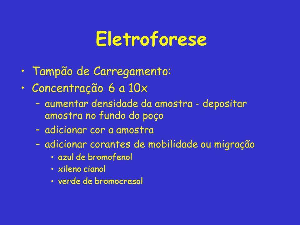 Eletroforese Tampão de Carregamento: Concentração 6 a 10x