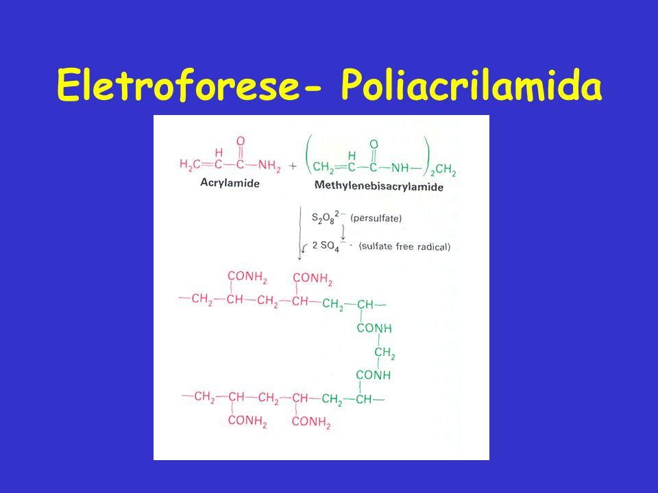 Eletroforese- Poliacrilamida
