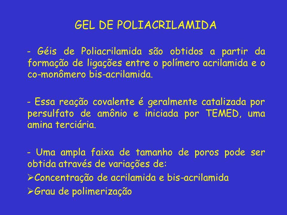 GEL DE POLIACRILAMIDA