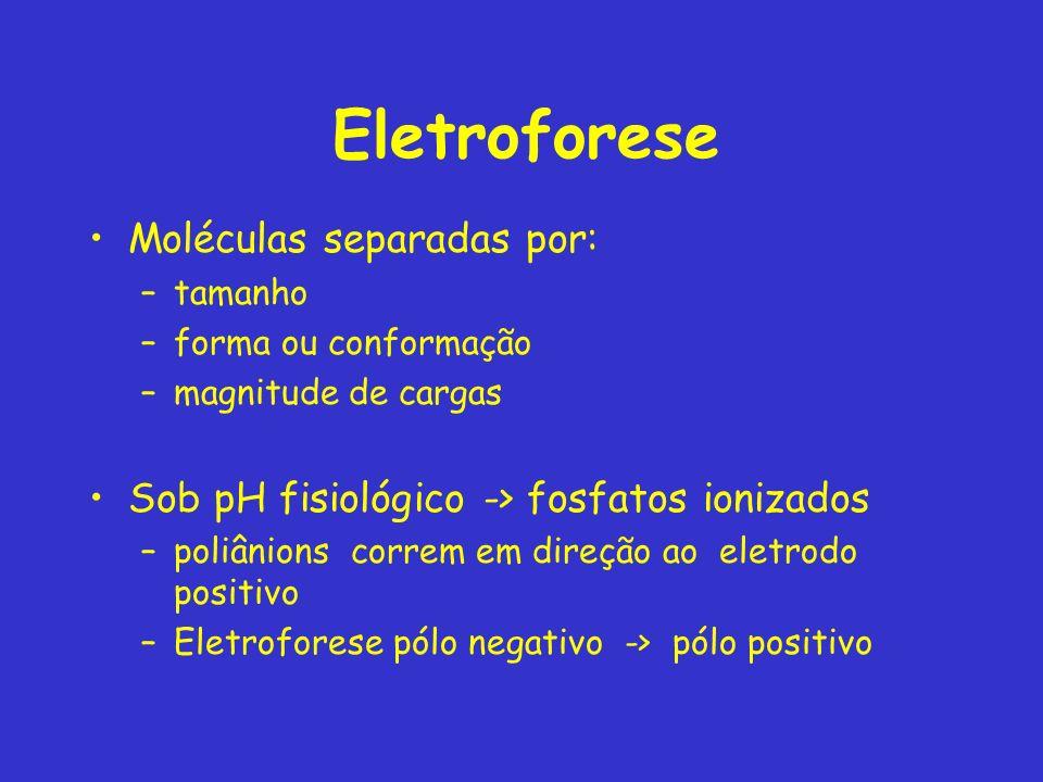 Eletroforese Moléculas separadas por: