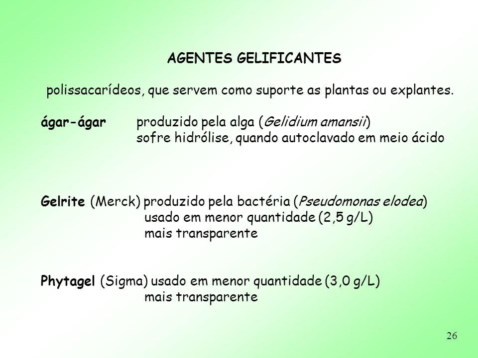 AGENTES GELIFICANTES polissacarídeos, que servem como suporte as plantas ou explantes. ágar-ágar produzido pela alga (Gelidium amansii)