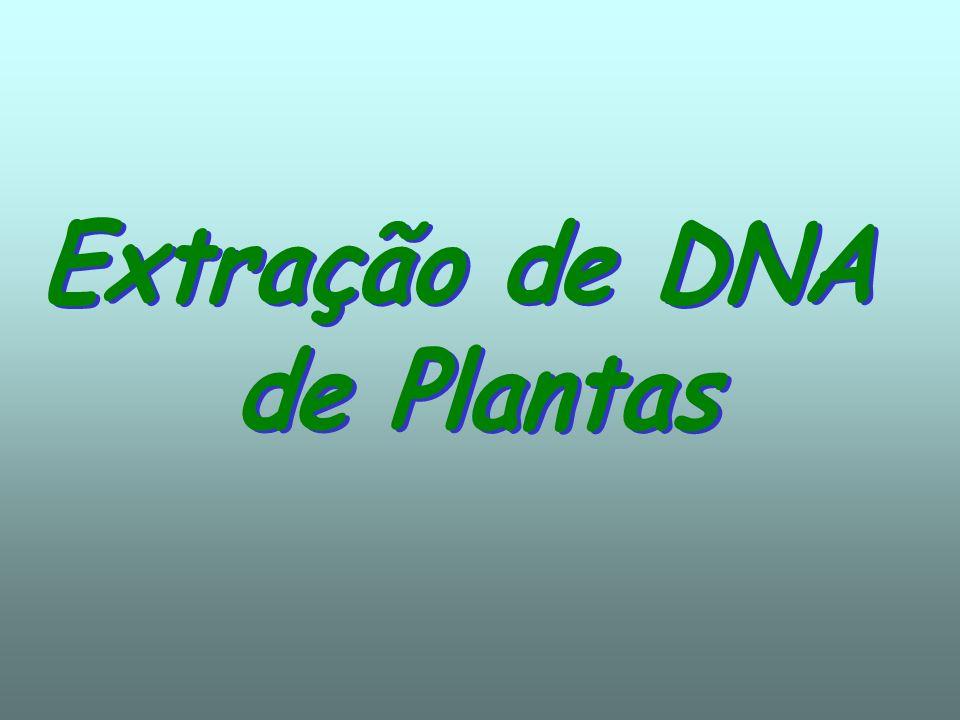 Extração de DNA de Plantas