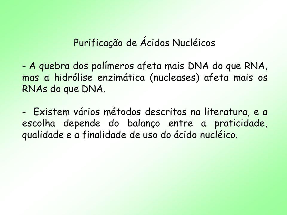 Purificação de Ácidos Nucléicos