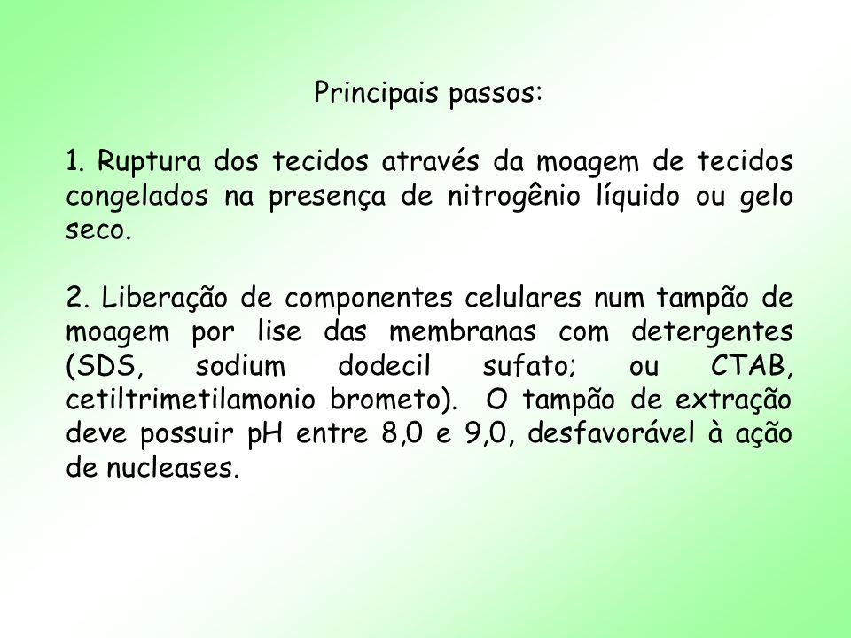 Principais passos: 1. Ruptura dos tecidos através da moagem de tecidos congelados na presença de nitrogênio líquido ou gelo seco.