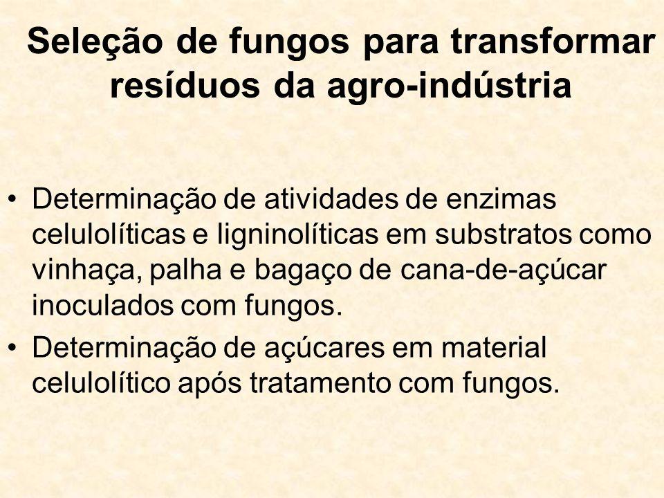 Seleção de fungos para transformar resíduos da agro-indústria