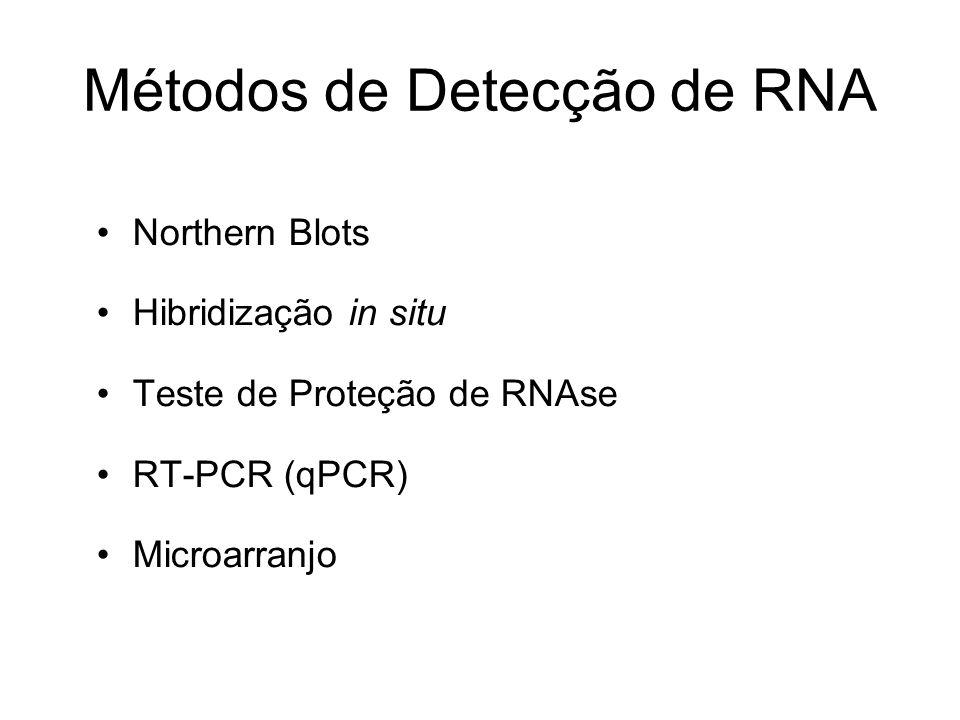 Métodos de Detecção de RNA