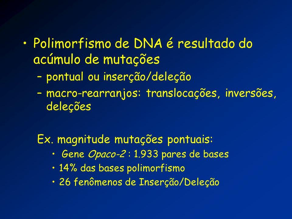 Polimorfismo de DNA é resultado do acúmulo de mutações