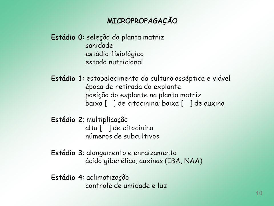 MICROPROPAGAÇÃO Estádio 0: seleção da planta matriz. sanidade. estádio fisiológico. estado nutricional.