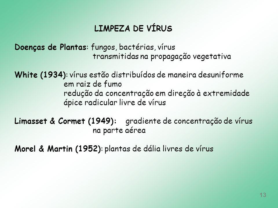 LIMPEZA DE VÍRUS Doenças de Plantas: fungos, bactérias, vírus. transmitidas na propagação vegetativa.