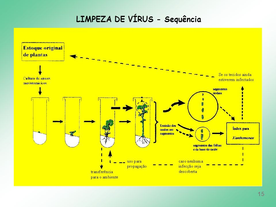 LIMPEZA DE VÍRUS - Sequência