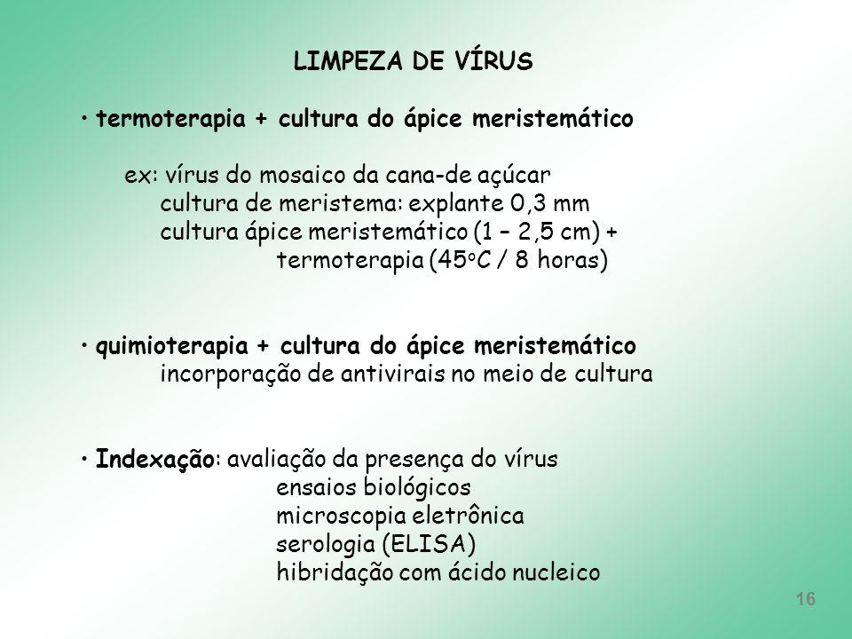 LIMPEZA DE VÍRUStermoterapia + cultura do ápice meristemático. ex: vírus do mosaico da cana-de açúcar.