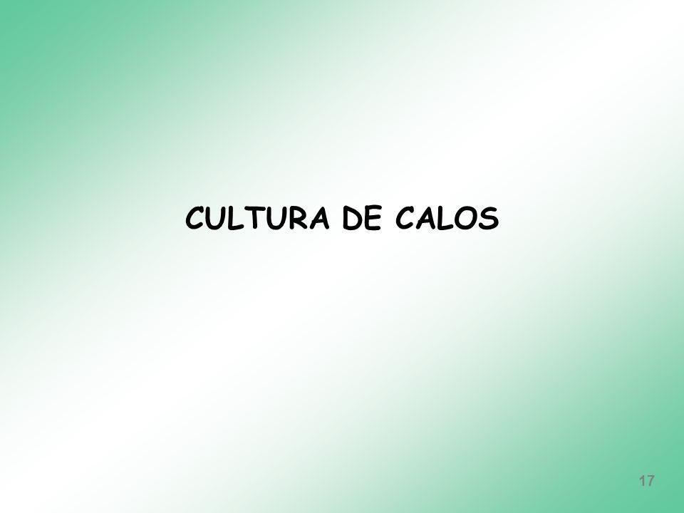 CULTURA DE CALOS