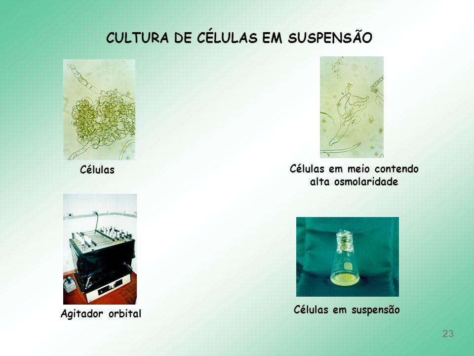 CULTURA DE CÉLULAS EM SUSPENSÃO Células em meio contendo
