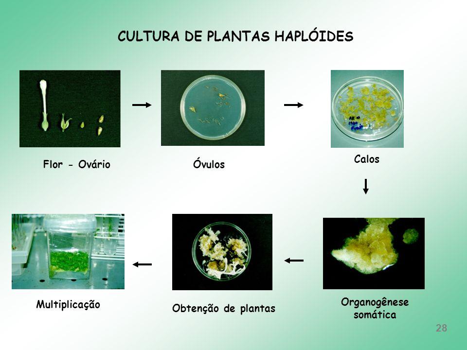 CULTURA DE PLANTAS HAPLÓIDES