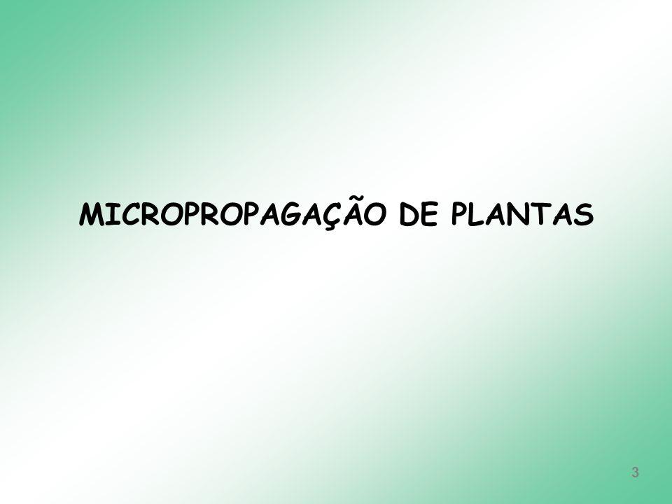 MICROPROPAGAÇÃO DE PLANTAS