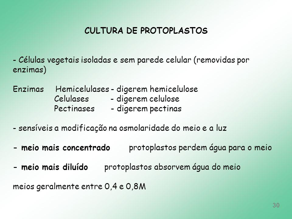 CULTURA DE PROTOPLASTOS