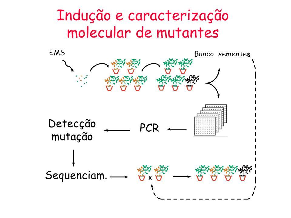 Indução e caracterização molecular de mutantes