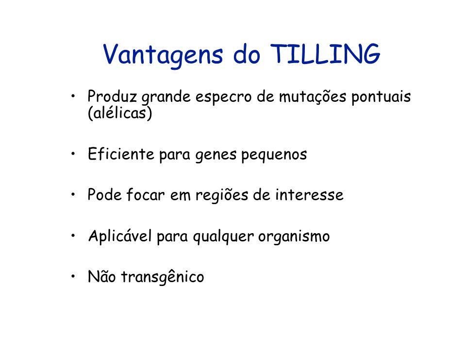 Vantagens do TILLING Produz grande especro de mutações pontuais (alélicas) Eficiente para genes pequenos.