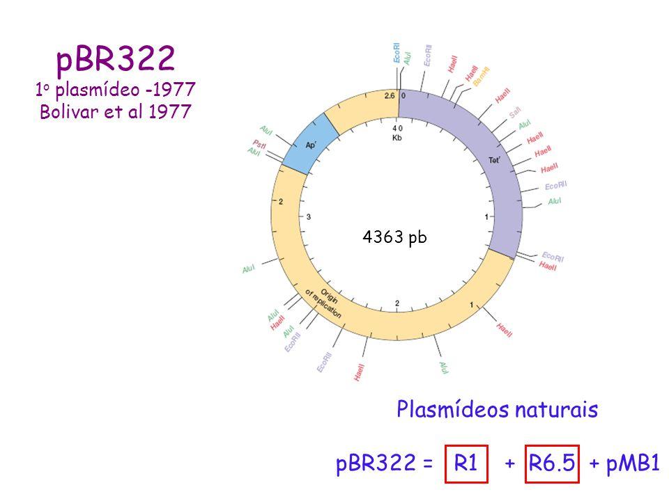 pBR322 Plasmídeos naturais pBR322 = R1 + R6.5 + pMB1