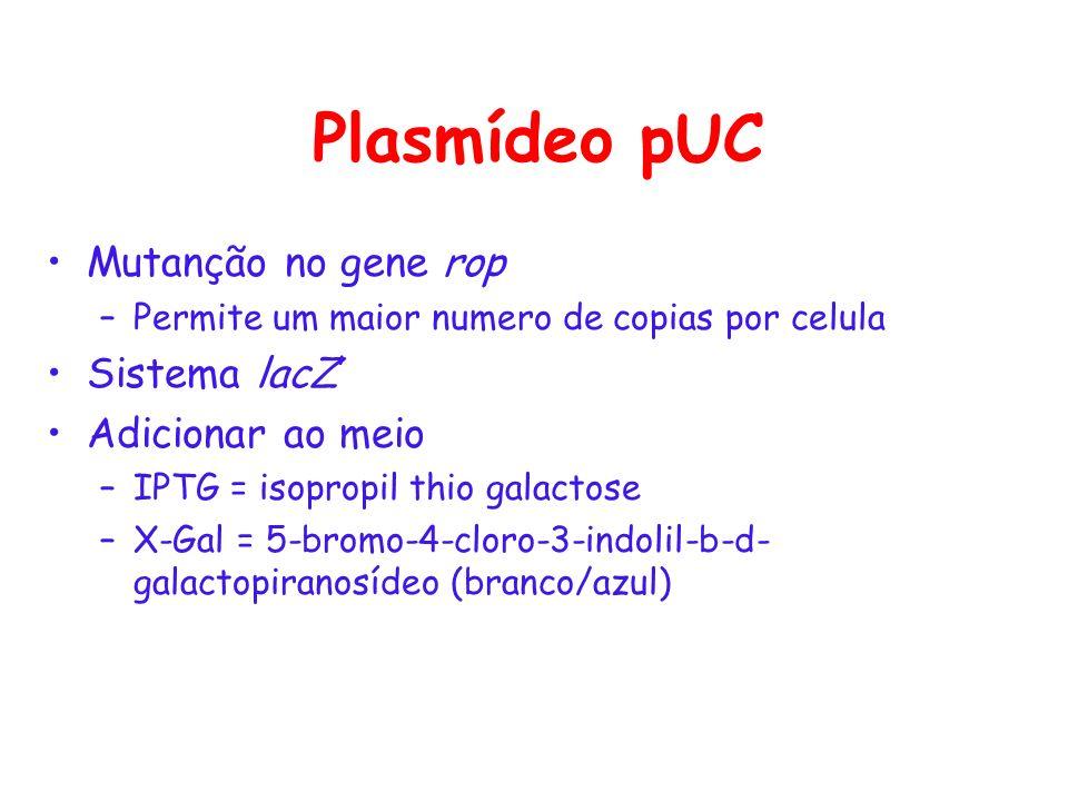 Plasmídeo pUC Mutanção no gene rop Sistema lacZ' Adicionar ao meio