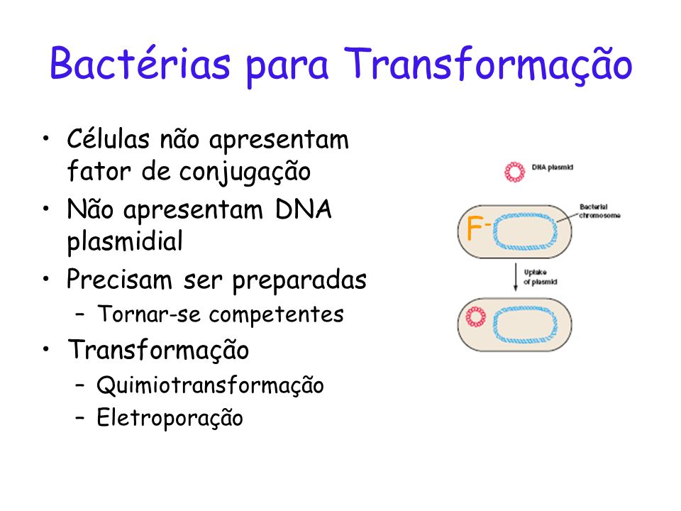 Bactérias para Transformação