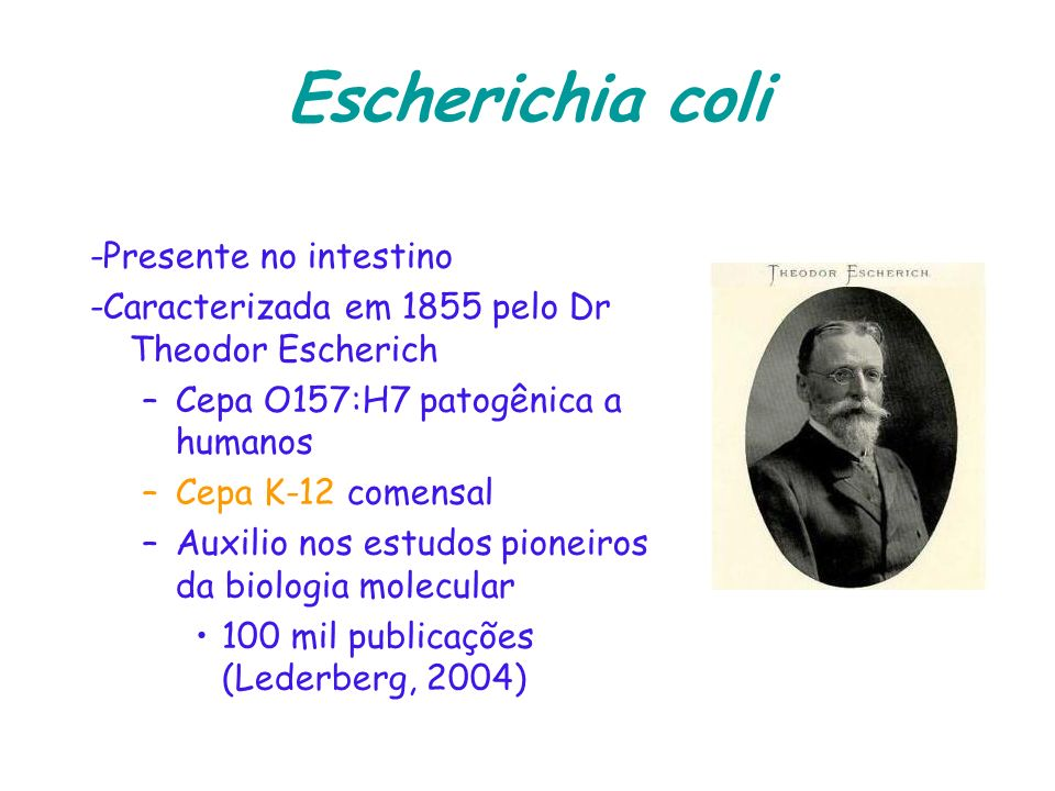 Escherichia coli -Presente no intestino
