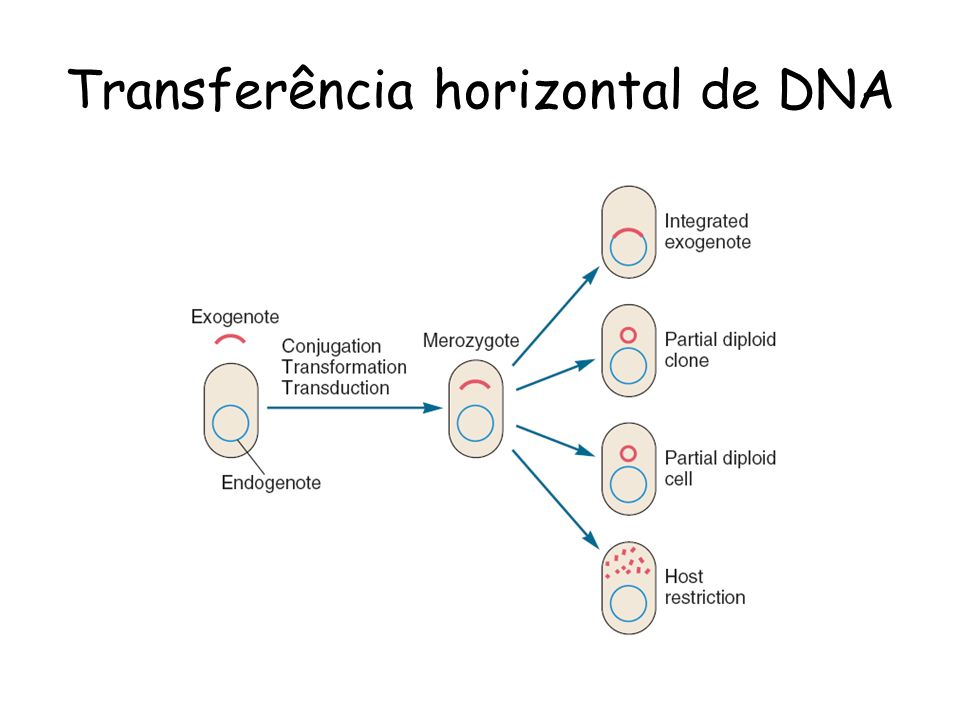 Transferência horizontal de DNA