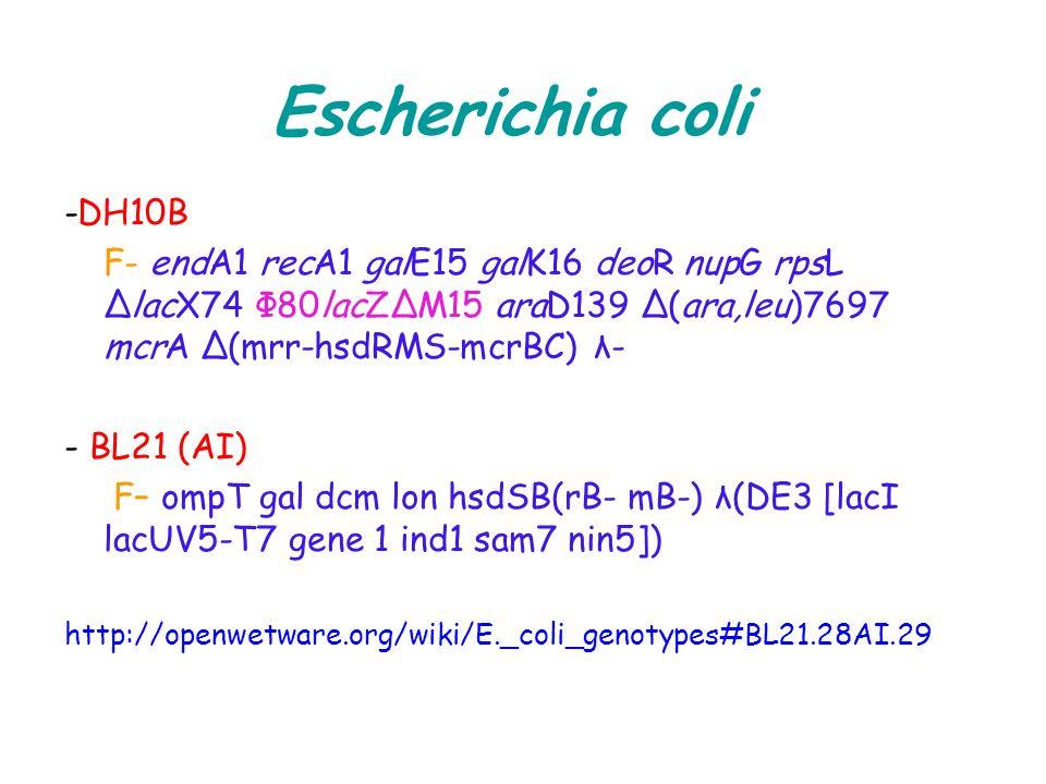 Escherichia coli -DH10B. F- endA1 recA1 galE15 galK16 deoR nupG rpsL ΔlacX74 Φ80lacZΔM15 araD139 Δ(ara,leu)7697 mcrA Δ(mrr-hsdRMS-mcrBC) λ-