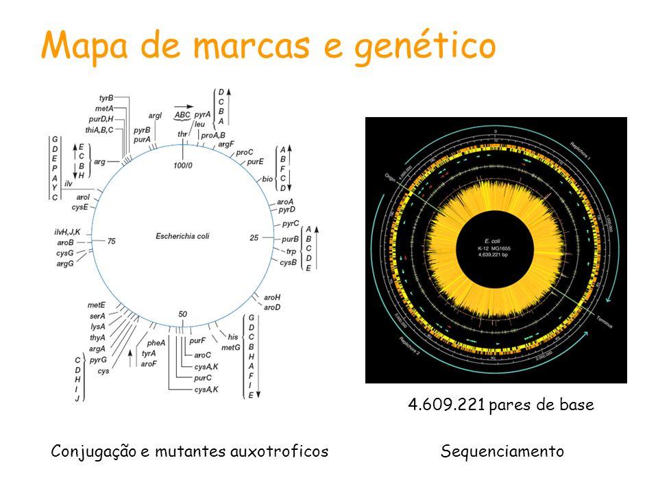 Mapa de marcas e genético