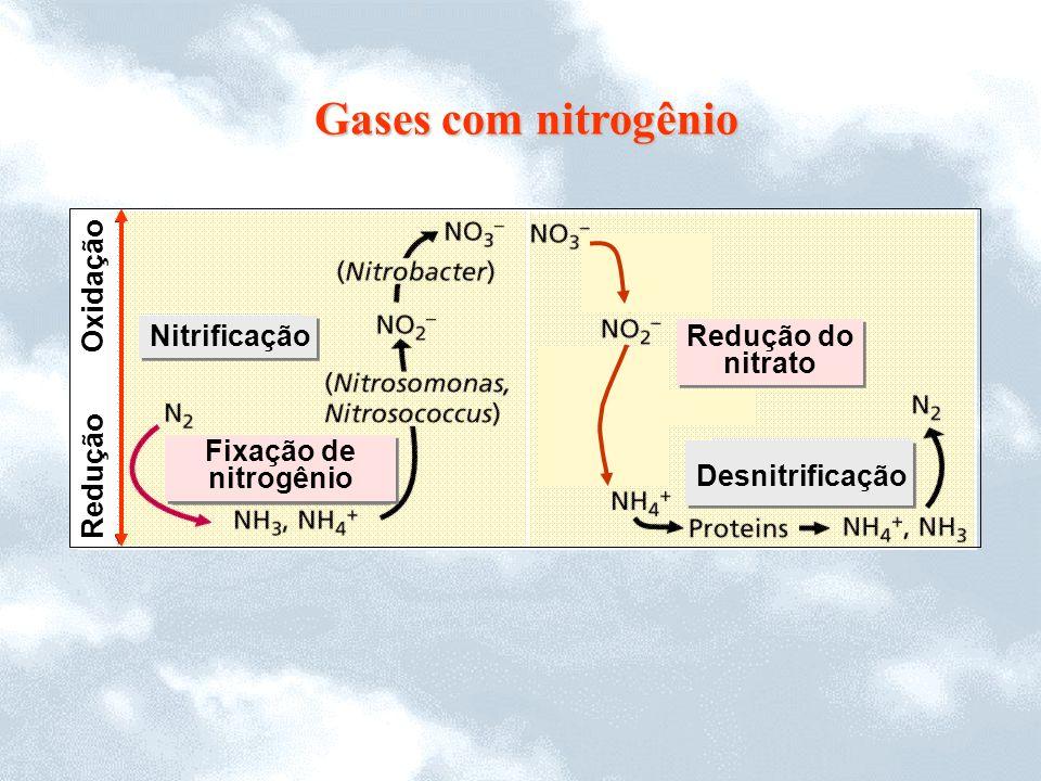 Gases com nitrogênio Oxidação Nitrificação Redução do nitrato Redução