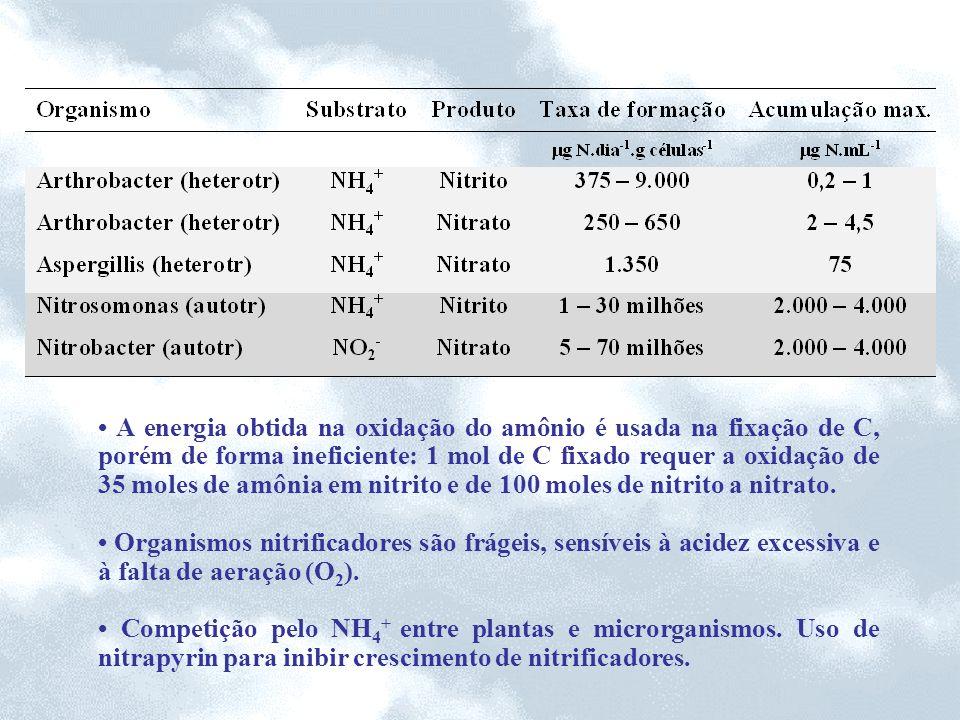 • A energia obtida na oxidação do amônio é usada na fixação de C, porém de forma ineficiente: 1 mol de C fixado requer a oxidação de 35 moles de amônia em nitrito e de 100 moles de nitrito a nitrato.