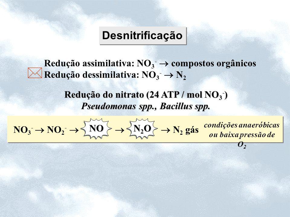 Redução do nitrato (24 ATP / mol NO3-) Pseudomonas spp., Bacillus spp.