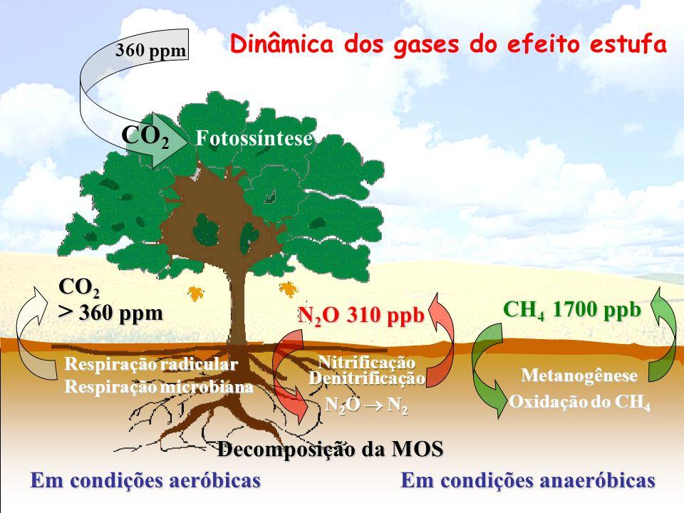 Dinâmica dos gases do efeito estufa