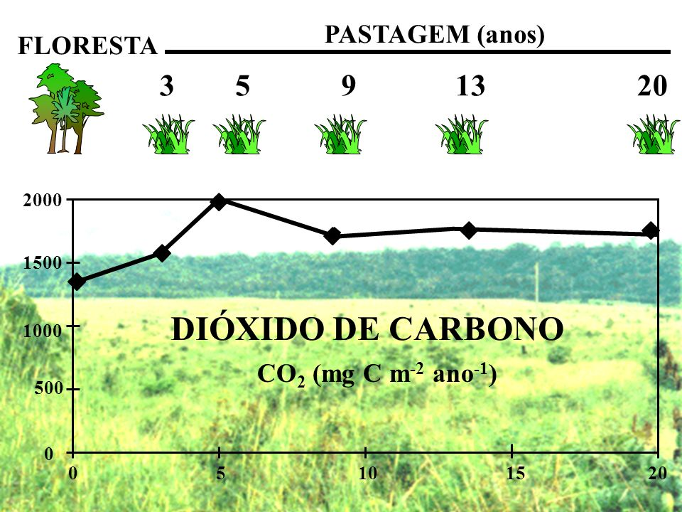 DIÓXIDO DE CARBONO 3 5 9 13 20 PASTAGEM (anos) FLORESTA