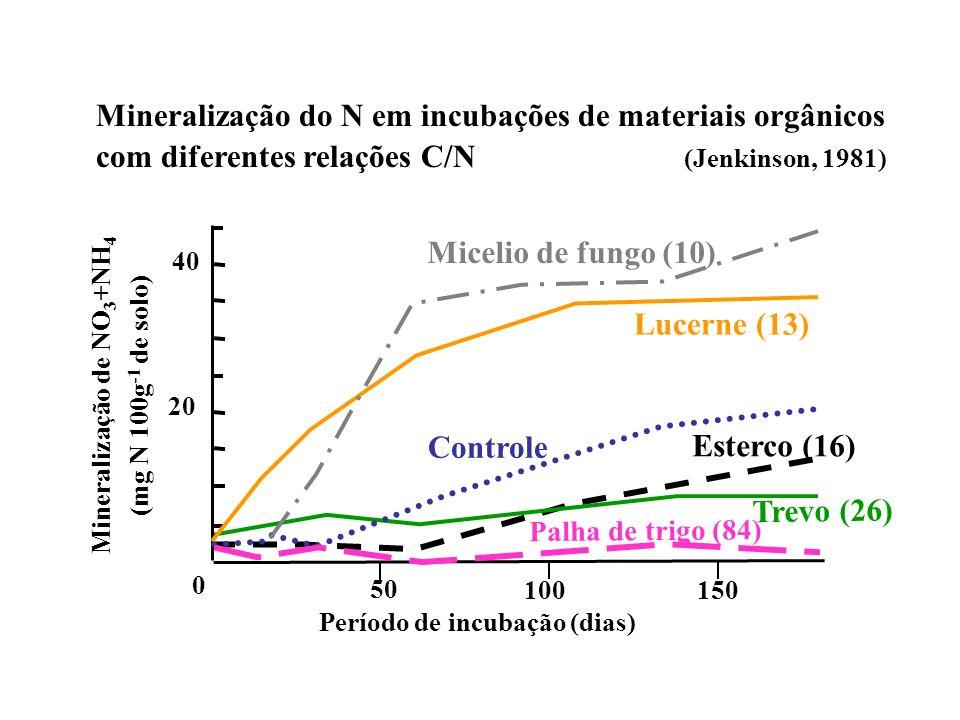 Mineralização de NO3+NH4 Período de incubação (dias)