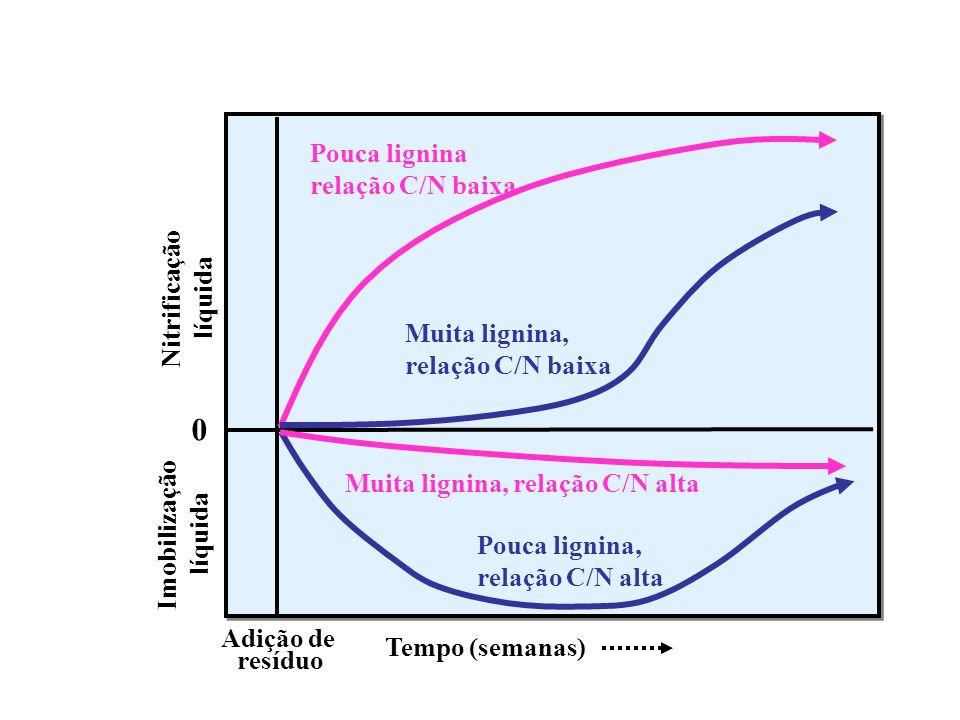 Imobilização líquida. Nitrificação. Adição de. resíduo. Tempo (semanas) Muita lignina, relação C/N alta.