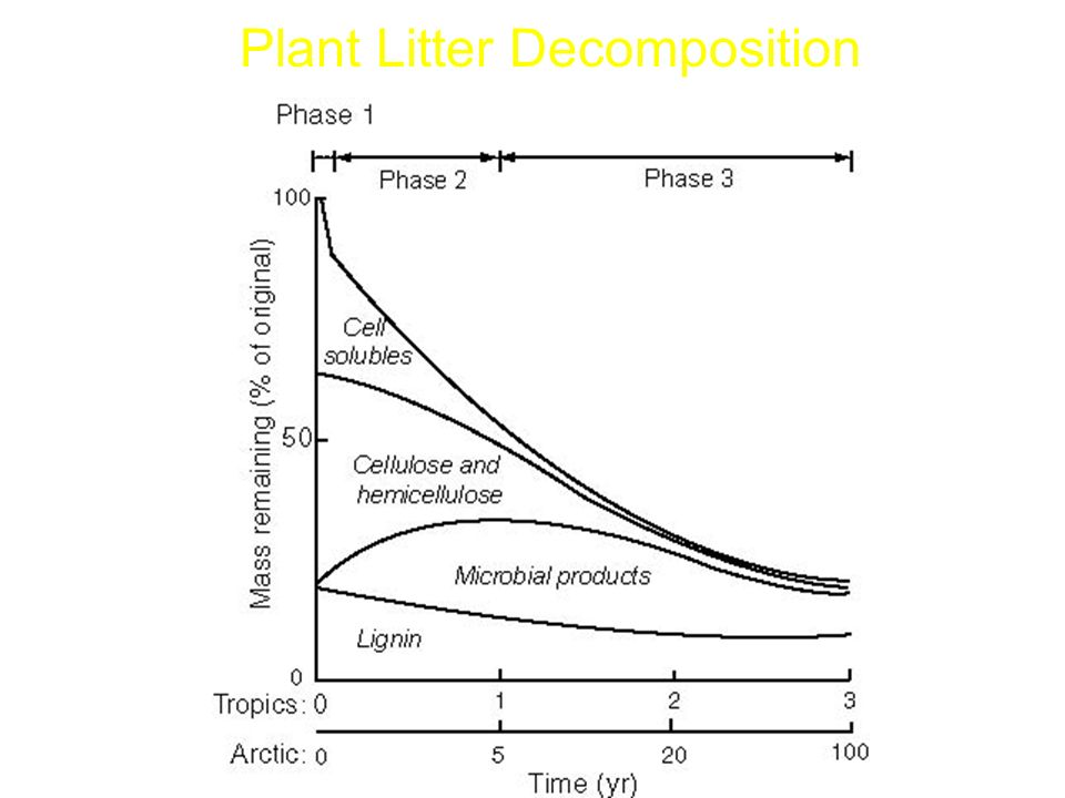 Plant Litter Decomposition