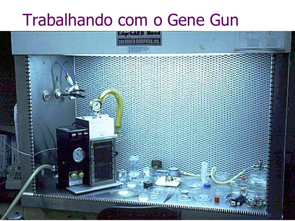 Trabalhando com o Gene Gun