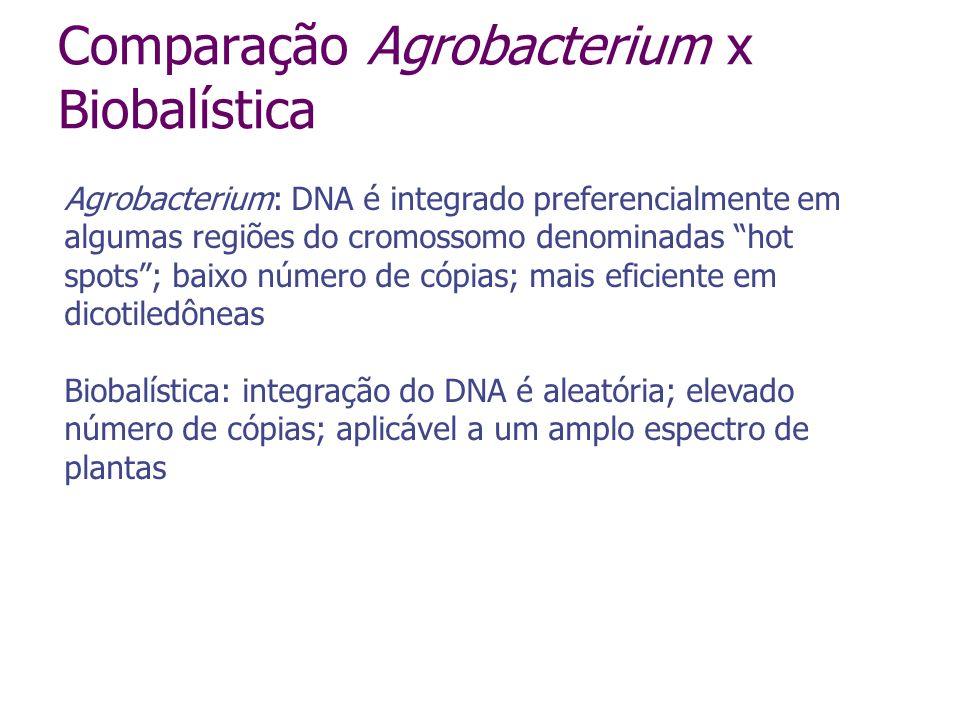 Comparação Agrobacterium x Biobalística