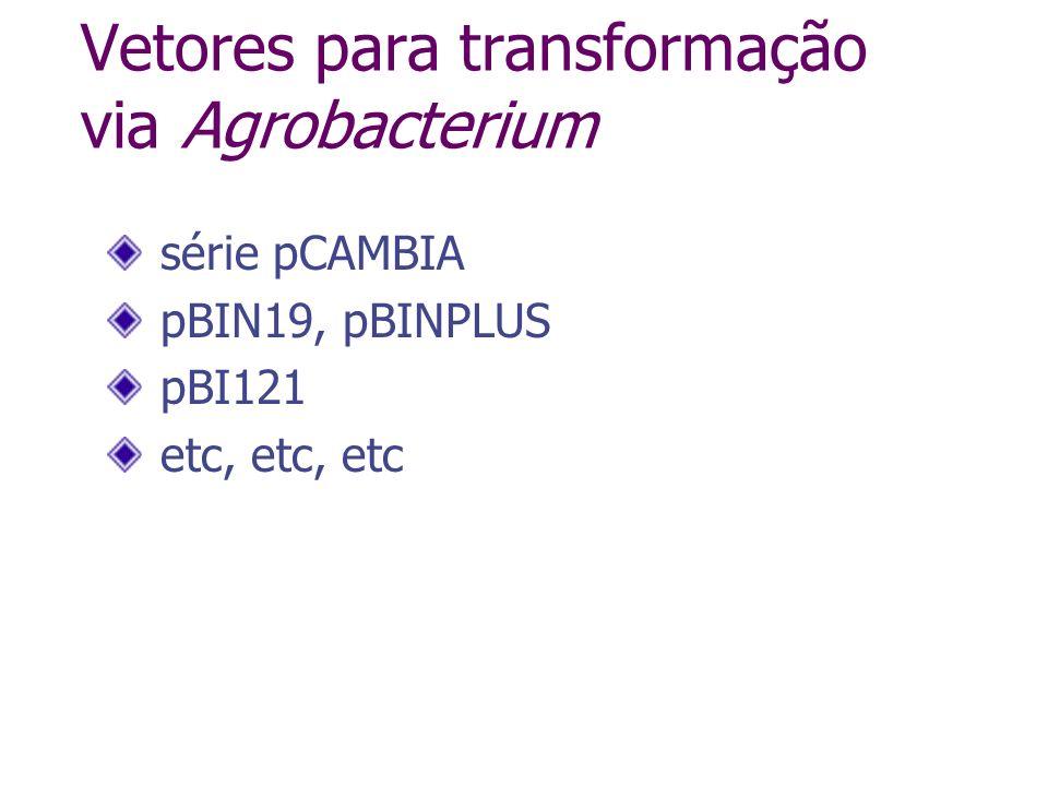 Vetores para transformação via Agrobacterium