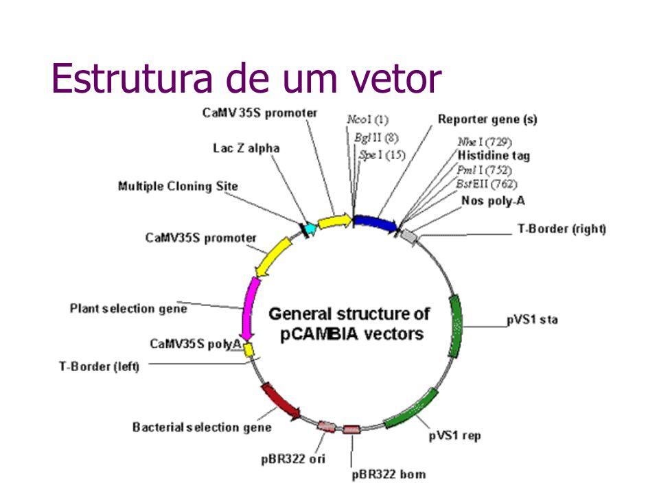 Estrutura de um vetor